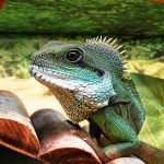 Why Exotic Pets Shouldn't Be Banned